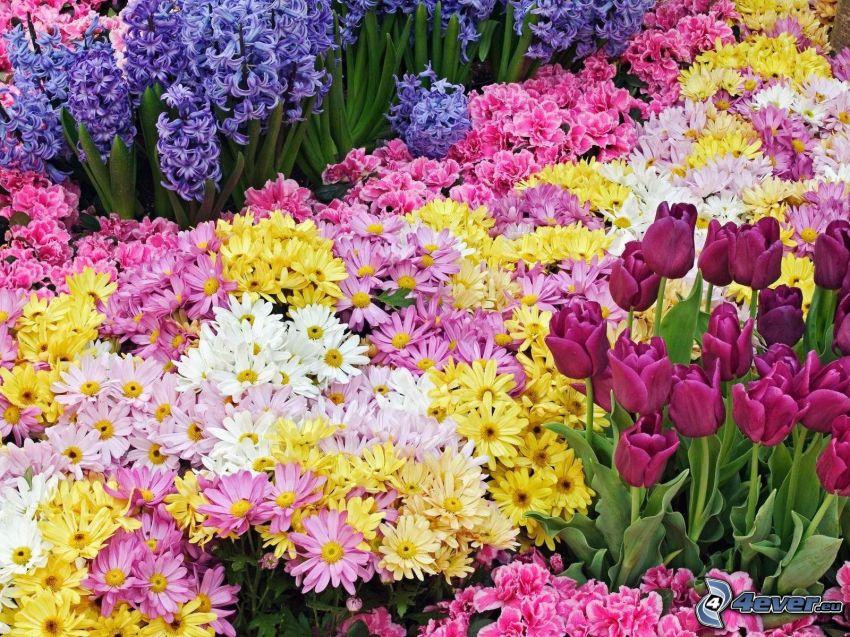 bunte Blumen, Gartenbeet
