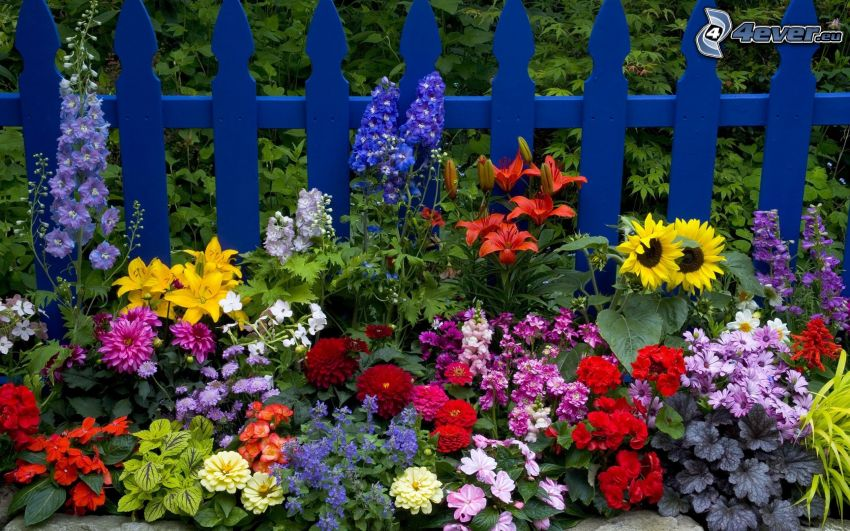 bunte Blumen, Zaun