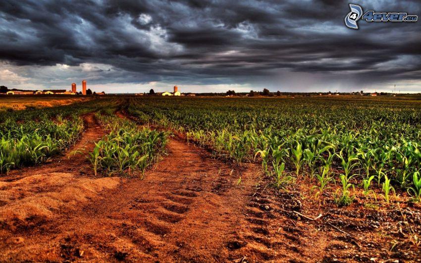 Feld, dunkle Wolken