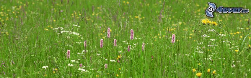 Feldblumen, Gras