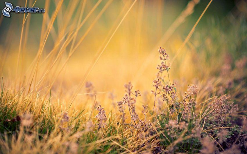 Feldblumen, trockenes Gras