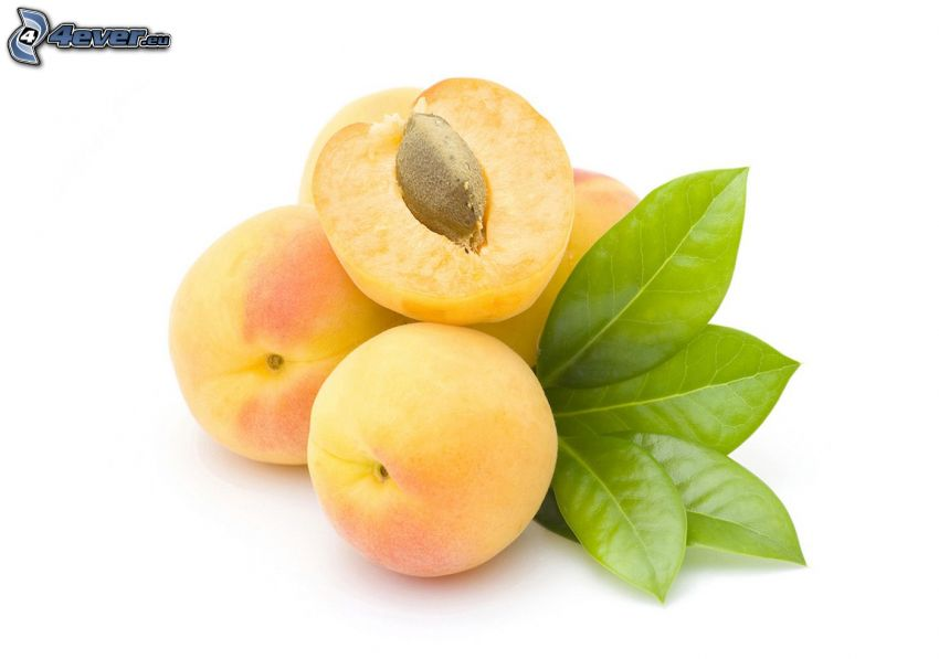 Aprikosen, grüne Blätter
