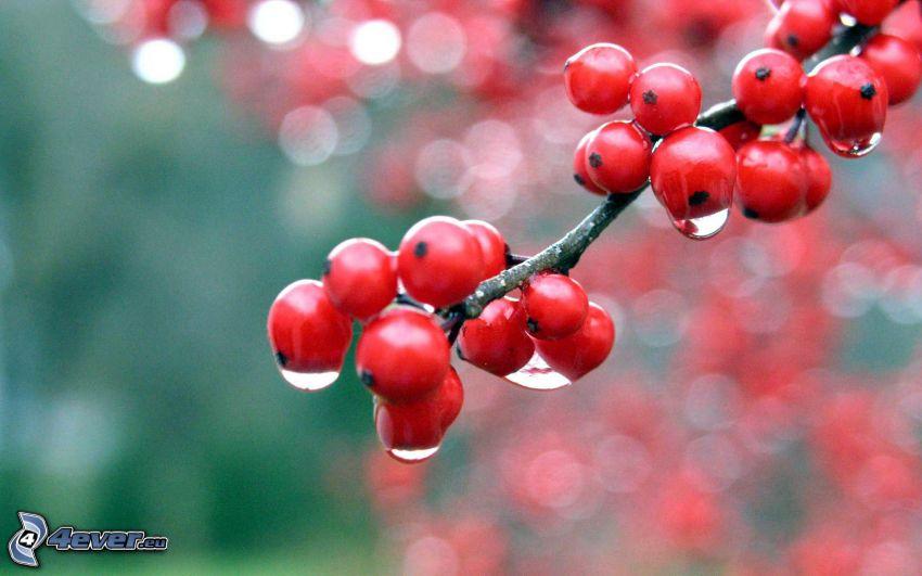 Beeren, Wassertropfen
