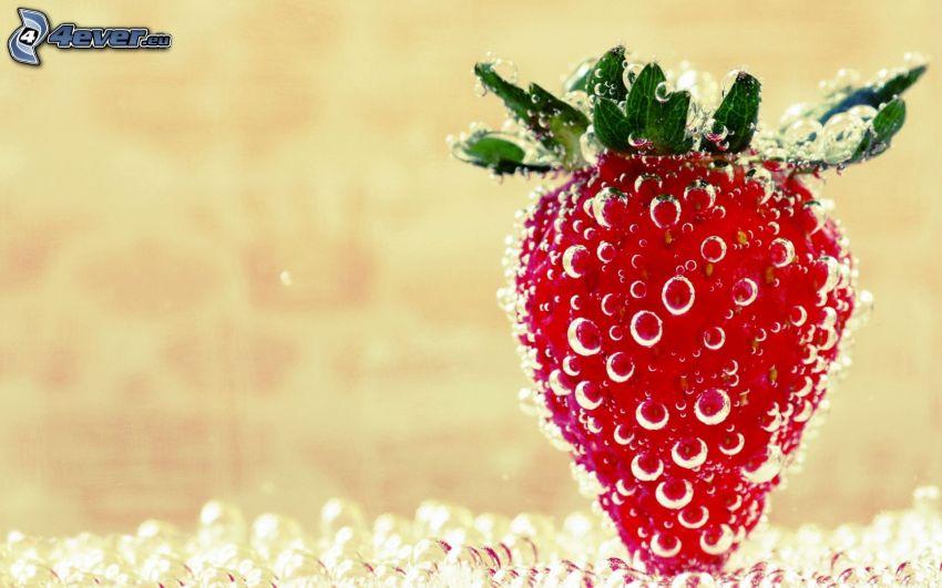 Erdbeere, Blasen