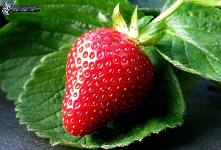 Erdbeere, grüne Blätter