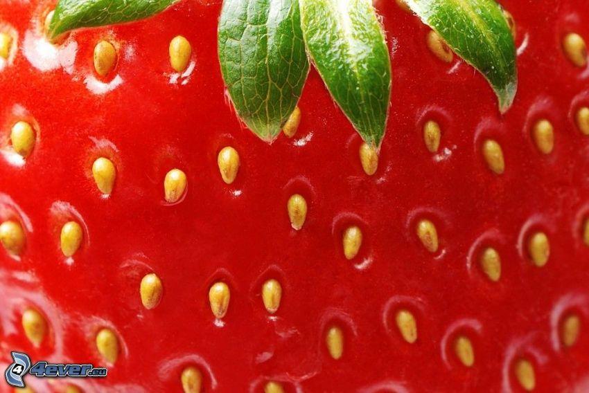 Erdbeere, Makro