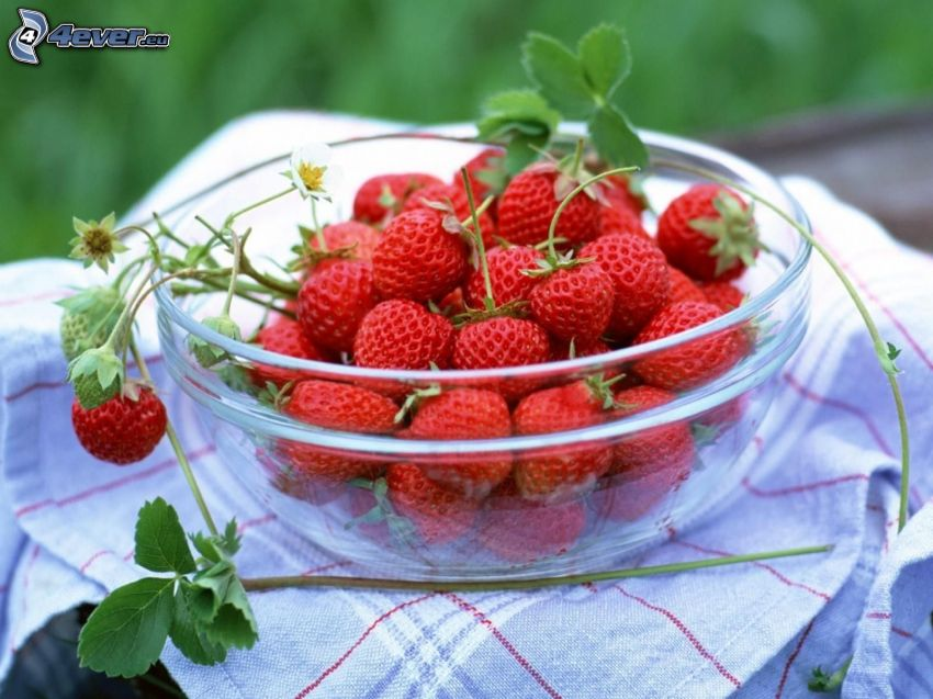 Erdbeeren, Schüssel
