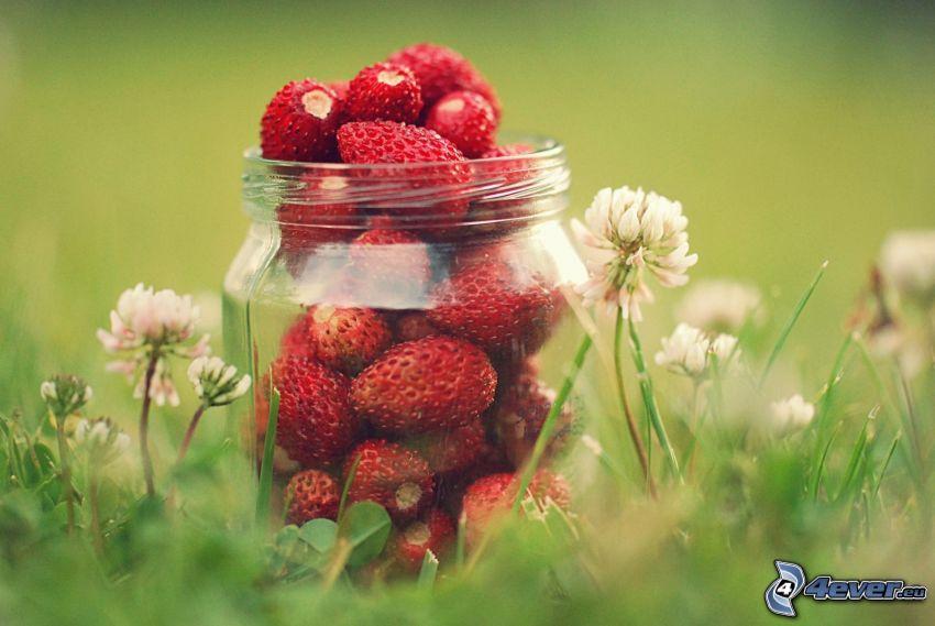 Erdbeeren, Tasse, Blumen, Wiese