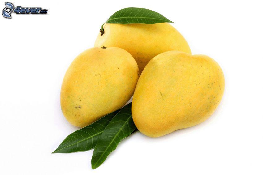 Mangos, grüne Blätter