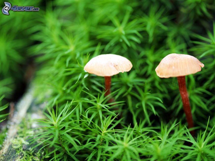 Pilze, Pflanzen
