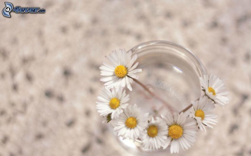 Gänseblümchen, Tasse