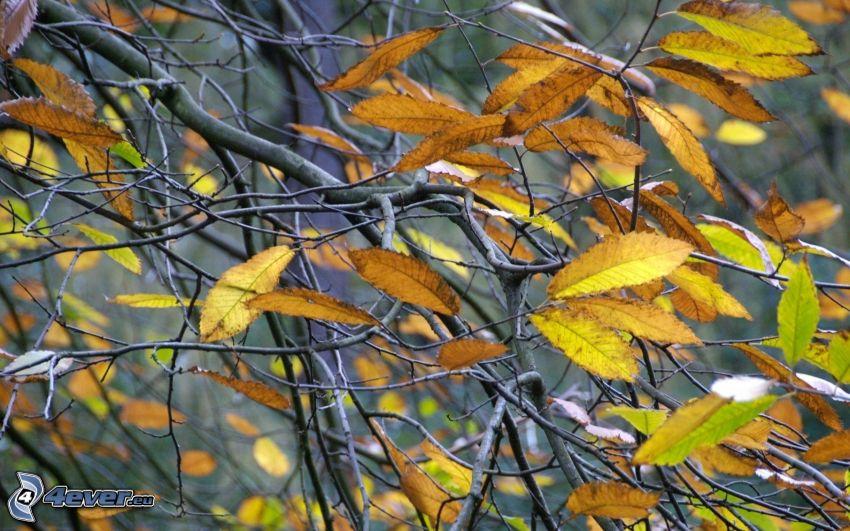 gelbe Blätter, Äste