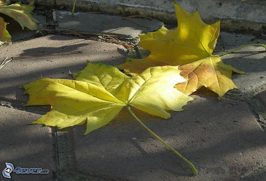 gelbe Blätter, Bürgersteig