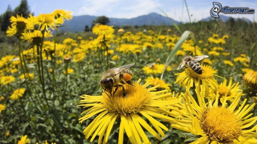 Bildergebnis für Blumen und Bienen Bilder