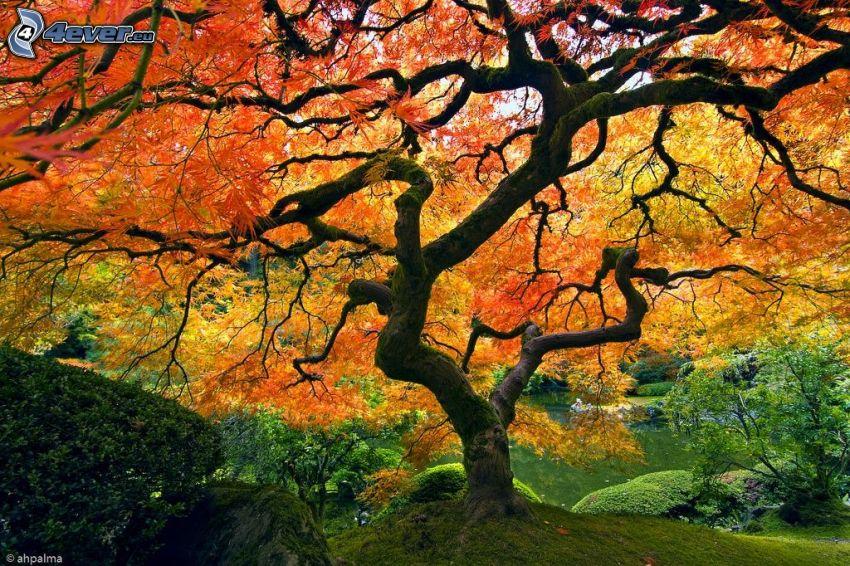 gelber Baum, See, Park