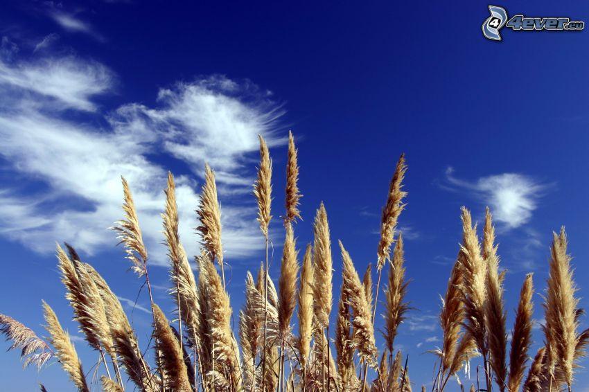 Getreide, Wolken
