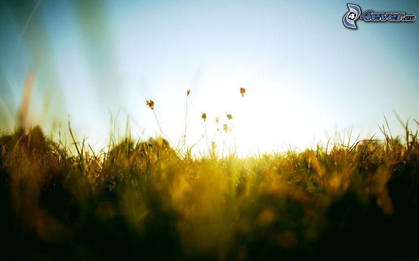 Gras, Pflanzen