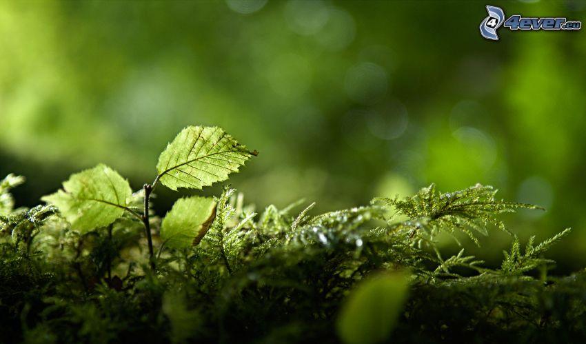 Grün, Blätter, Moos