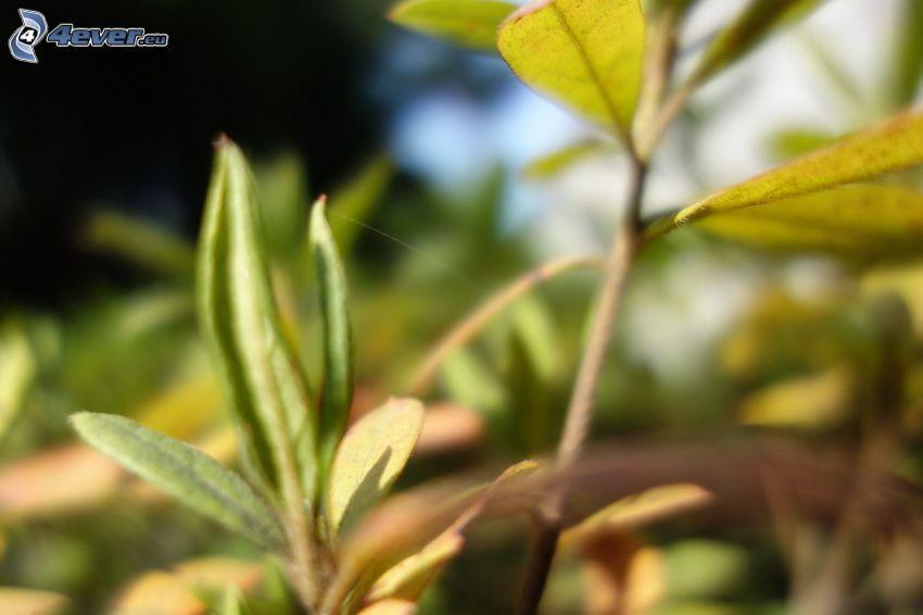 grüne Blätter, Zweig