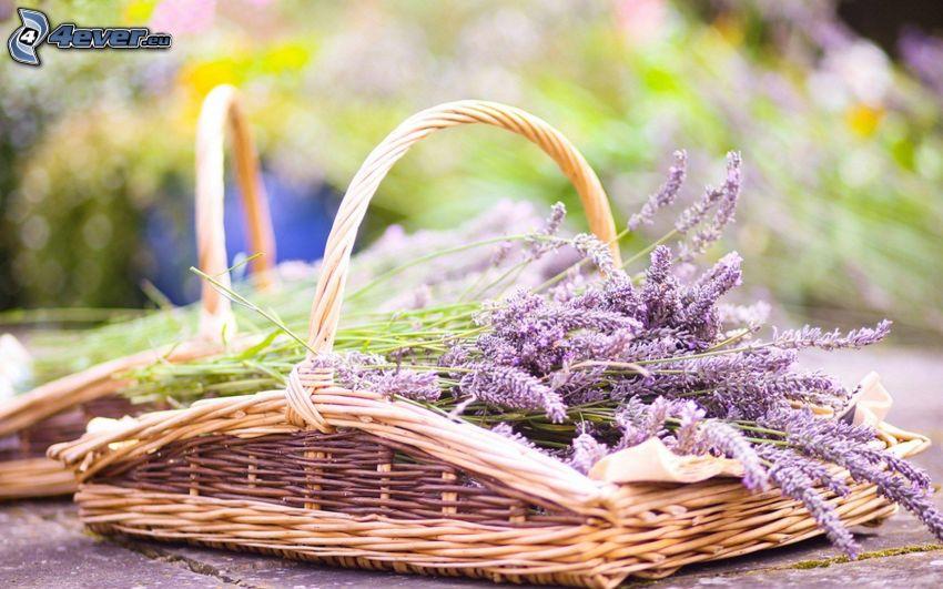 Lavendel, Korb