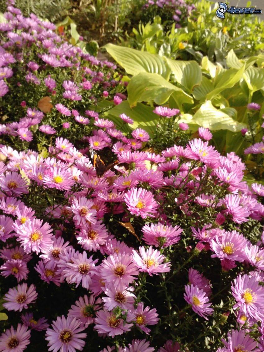lila Blumen, Blätter