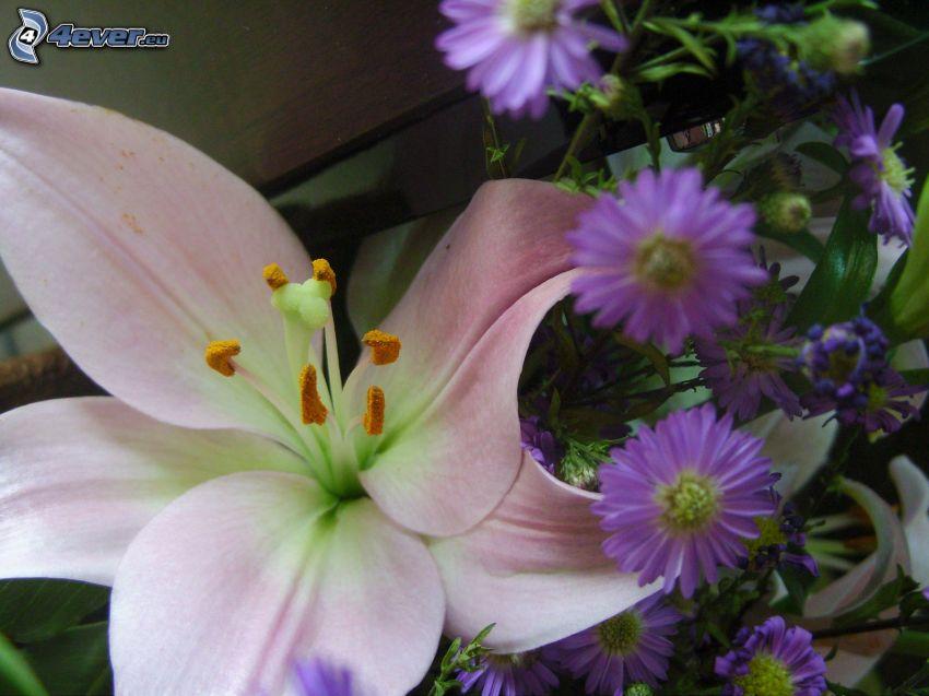 Lilie, lila Blumen