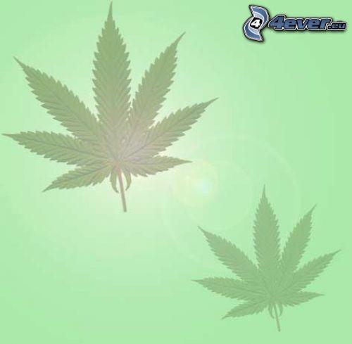 Marihuana, Blätter