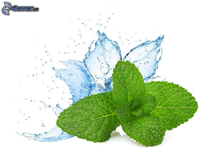 Minze, Wasser
