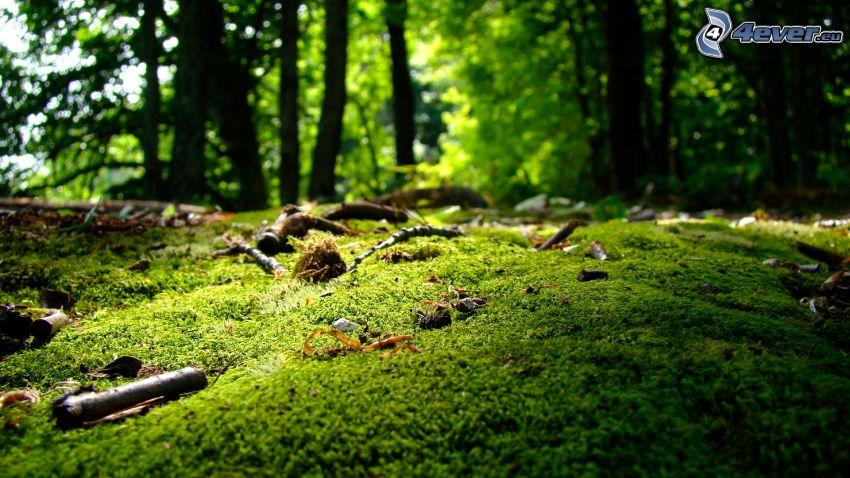 Moos, Wald