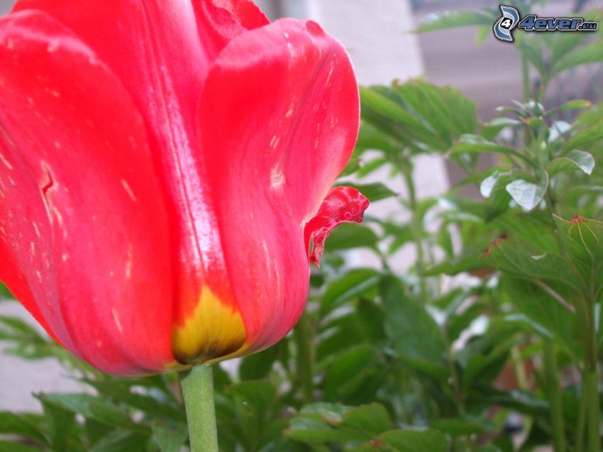 Natur, Blume