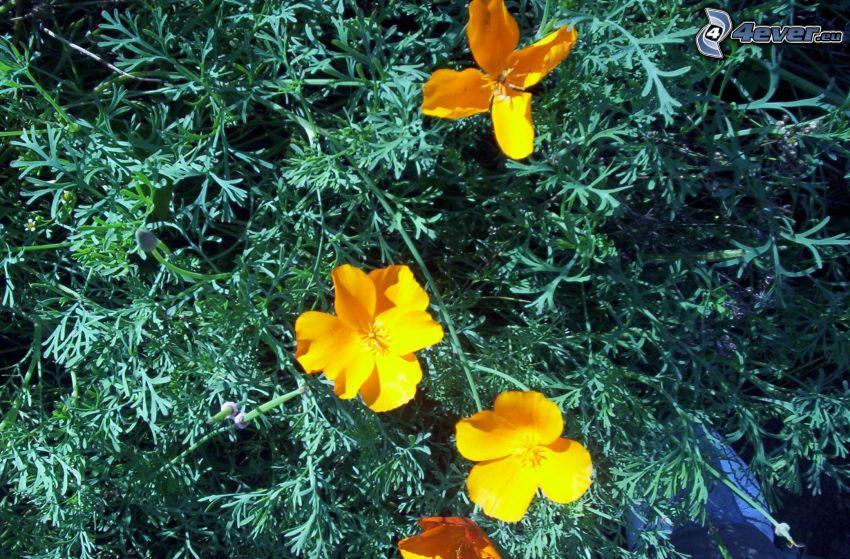 Natur, Blumen