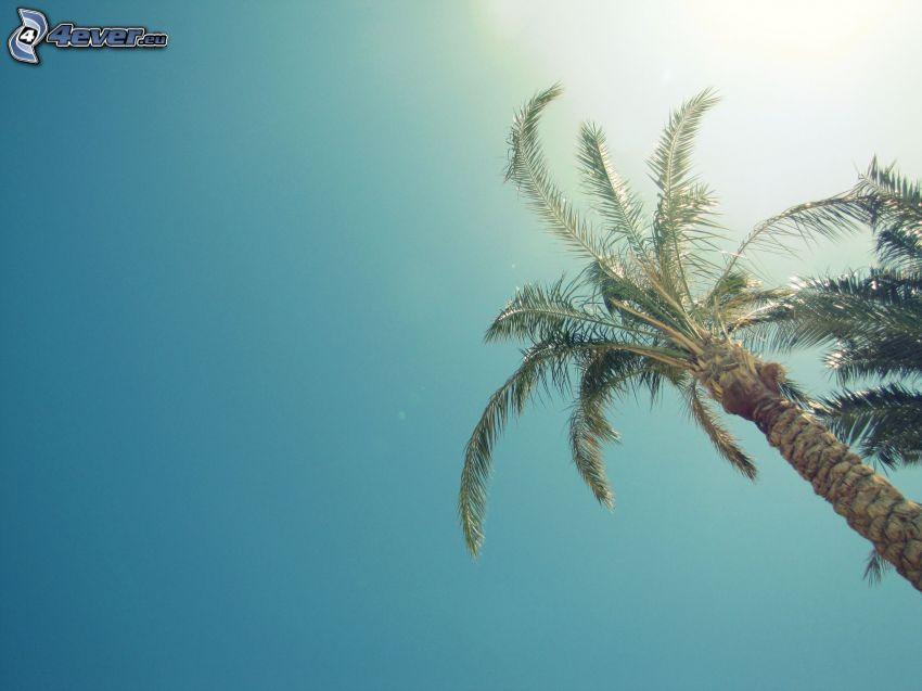 Palme, Himmel