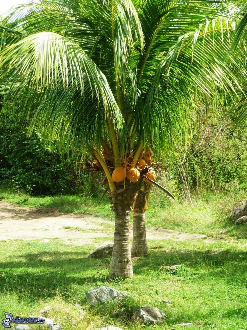 Palmen, Grün