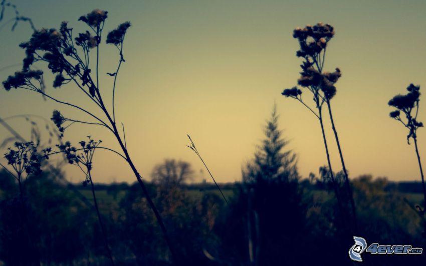Pflanzen, Feldblumen