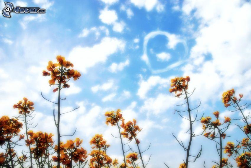 Pflanzen, Himmel, Wolken, Herz
