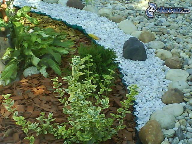Pflanzen, Steine