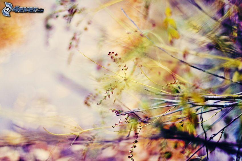 Pflanzen, Zweig