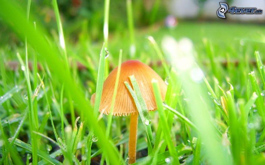 Pilz, Gras