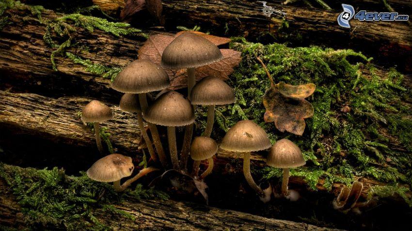 Pilze, Moos, Holz