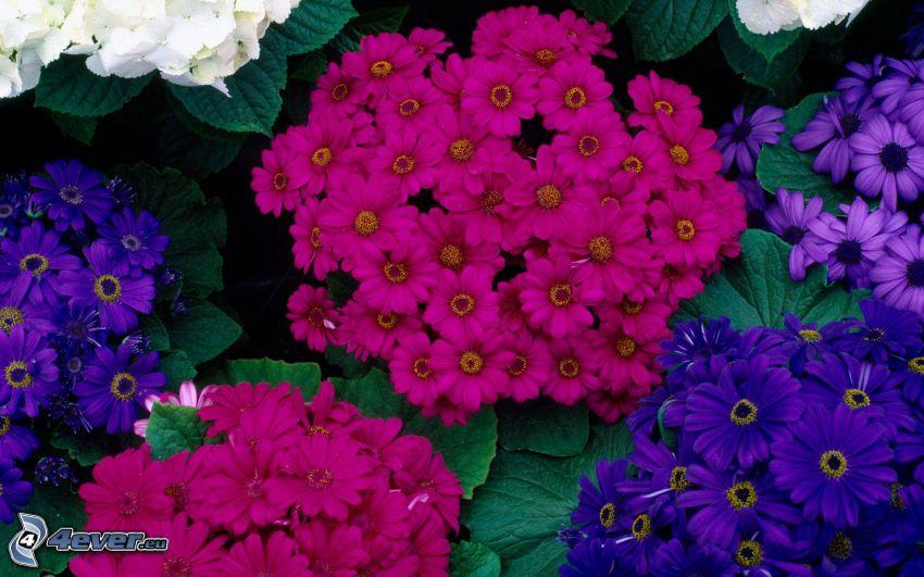 rosa Blumen, lila Blumen