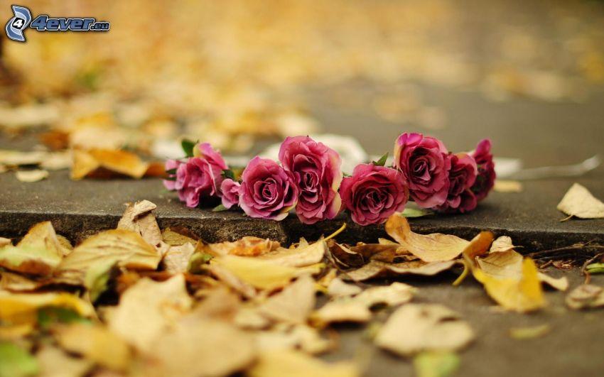 rosa Blumen, trockene Blätter