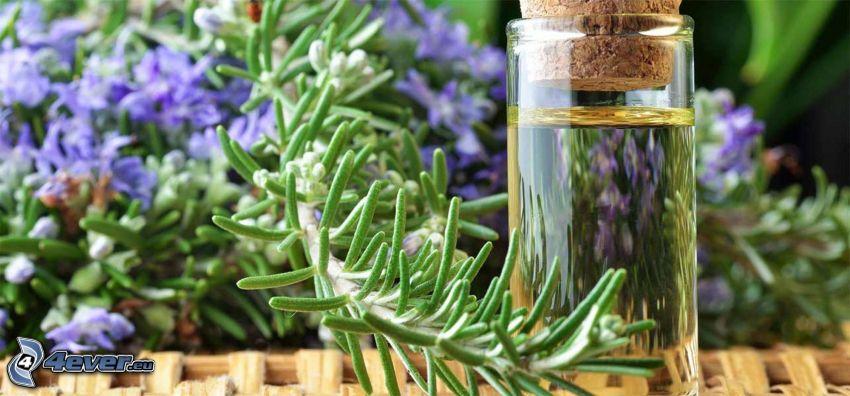 Rosmarin, Öl, lila Blumen