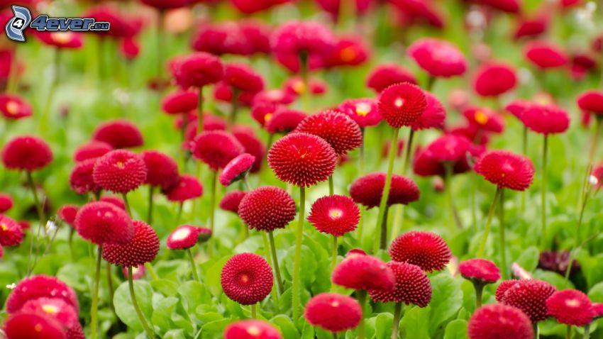 roten Blumen