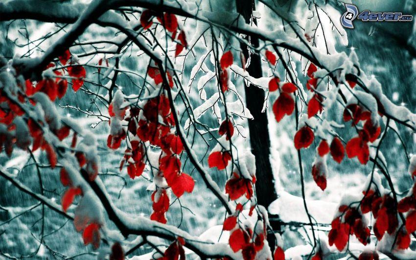schneebedeckter Baum, rote Blätter