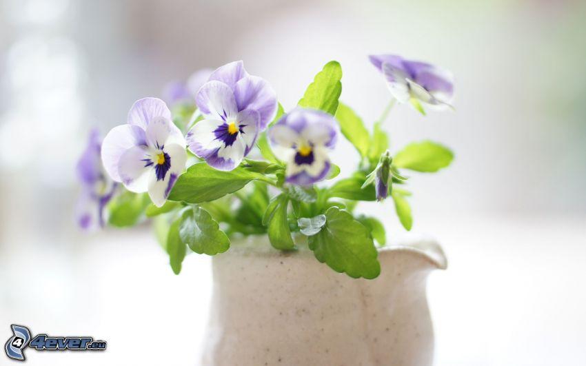 Stiefmütterchen, Vase