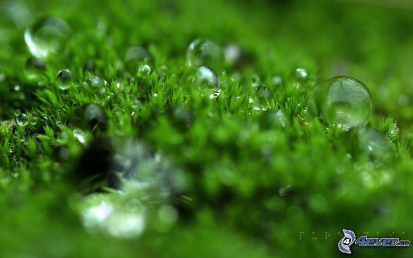 Tau auf dem Gras, Wassertropfen