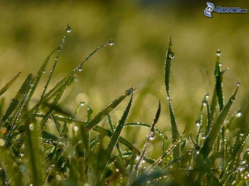 Tau auf dem Gras