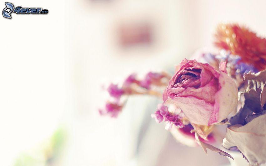 trockenblumen, getrockneten Blüten
