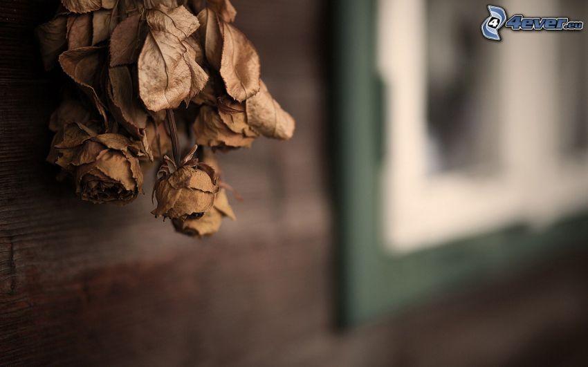 trockenblumen, Rosen