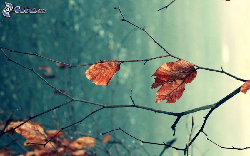 trockene Blätter, Äste
